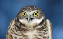 gräva stående för owl 2 arkivfoto