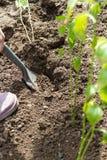 Gräva ut ett hål för att plantera plantor Arkivbild