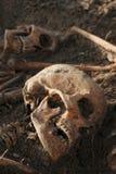 Grävde människarest: slut upp av två skelett med skallar royaltyfri fotografi