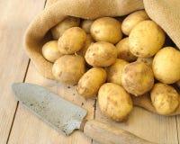 grävde nytt potatisar Arkivfoto