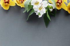 Grå bakgrund för ljusa vårbukettblommor arkivbilder