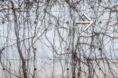 Grå betongvägg med vridna djungelvinrankor och pil för vit metall som pekar till rätten Arkivfoto