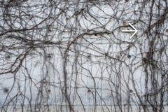 Grå betongvägg med vridna djungelvinrankor och pil för vit metall som pekar till rätten Royaltyfri Bild