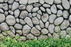 Grå färg- eller grå färgstenvägg med den naturliga texturrundastenen med den låga busken framtill Naturlig vägg för gammal stil f arkivfoto