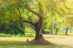 Grå färg härmar sammanträde på ett träd i djungeln arkivfoto