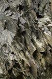 Grå färg vaggar texturerar Abstrakt bakgrund av stenen Arkivbild