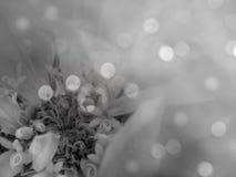 Grå färg-vit blomma på den suddiga bokehbakgrunden Närbild alla några objekt för den blom- illustrationen för sammansättningselem Royaltyfri Foto