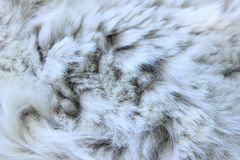 Grå färg-vit pälsslut upp abstrakt textur för bakgrundsclosepäls upp Royaltyfria Bilder