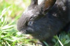 Grå färger behandla som ett barn kanin på gräset Royaltyfria Bilder