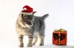 Grå färger behandla som ett barn kattungen med jultomtenhattanseende arkivfoton