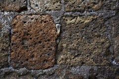Grå färger för brunt för vägg för texturTuffsten Arkivbild