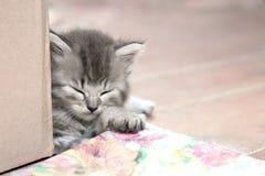 Grå färger gjorde randig kattlögner på en pläd arkivbild