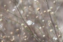 Grå färger med vit, fjäril på en torr växt royaltyfri fotografi
