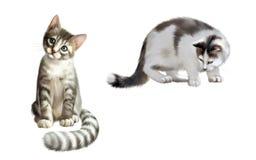 Den små grå färgkattungen, vaket se för vuxen katt besegrar Arkivfoton