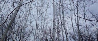 Grå färgskog Arkivfoto