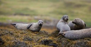 Grå färgskyddsremsor i Skottland Arkivfoto