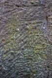 Grå färgstentextur med små skrapor och gul mossa arkivfoto