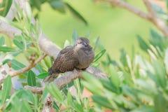 Grå fågel på träd Royaltyfria Bilder