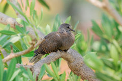 Grå fågel på träd Arkivfoto