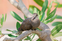 Grå fågel på träd Arkivbild