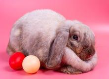 Grå fettig kanin på rosa bakgrund med röda och krämiga ägg för påsktema royaltyfri bild