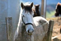 grå hästpaddock royaltyfria foton