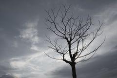 Grå himmel för döda träd i aftonen Royaltyfri Fotografi