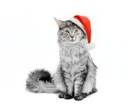 Grå katt i den Santa dräkten Royaltyfria Bilder