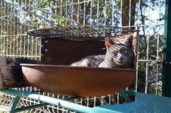 Grå katt i grillfest Arkivfoton