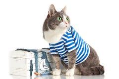 Grå katt i sjömandräkt på isolerad bakgrund med bröstkorgen Arkivbild