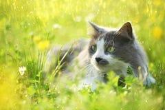 Grå katt i trädgård Fotografering för Bildbyråer