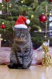 Grå katt med den santa hatten Royaltyfri Foto