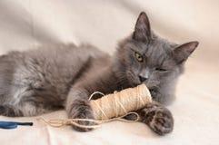 Grå katt med en skein av tråden Royaltyfri Fotografi
