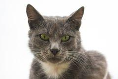 Grå katt på en grå himmelbakgrund Grå färgkatt royaltyfri fotografi