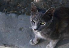 Grå katt på gatan Arkivfoton