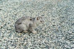 Grå katt på grått grus Royaltyfri Foto
