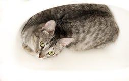 Grå katt som ligger i badrummet, trött kattunge över suddighetsbakgrund, lat katt, djur, hemhjälp Royaltyfria Bilder