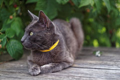 Grå katt som ligger på en ask royaltyfria foton
