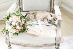 Grå katt som ligger på en stol nära bukett av blommor arkivbilder