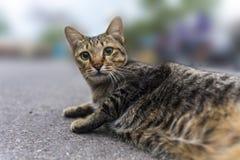 Grå katt som ligger på jordning Arkivbild