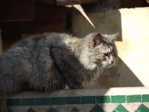 Grå katt som sitter på en vägg royaltyfri fotografi