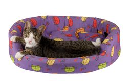 grå kattunge Royaltyfri Bild