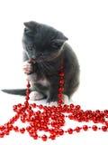 grå kattunge för julgirland little Arkivfoton