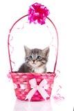 Grå kattunge i en rosa elegant korg med en pilbåge. Royaltyfri Bild