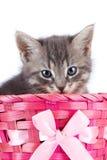 Grå kattunge i en rosa korg med en pilbåge. Arkivbild