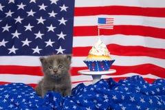 Grå kattunge i patriotisk partiinställning Royaltyfri Fotografi
