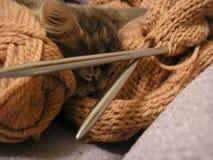 grå kattunge little Royaltyfri Bild