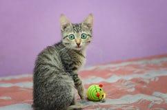 Grå kattunge med gröna ögon som sitter på soffan royaltyfria bilder