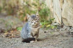 Grå kattunge som bara sitter på gatan royaltyfria bilder
