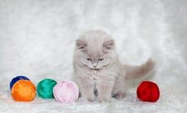 Grå kattungevitbakgrund Fotografering för Bildbyråer